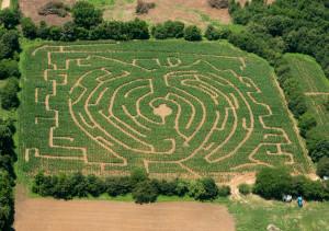 Corn maze 2015 (1 of 1)