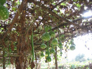 Image Result For Arbor And Vegetable Garden